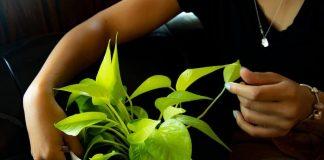 LeafMe - plant shop