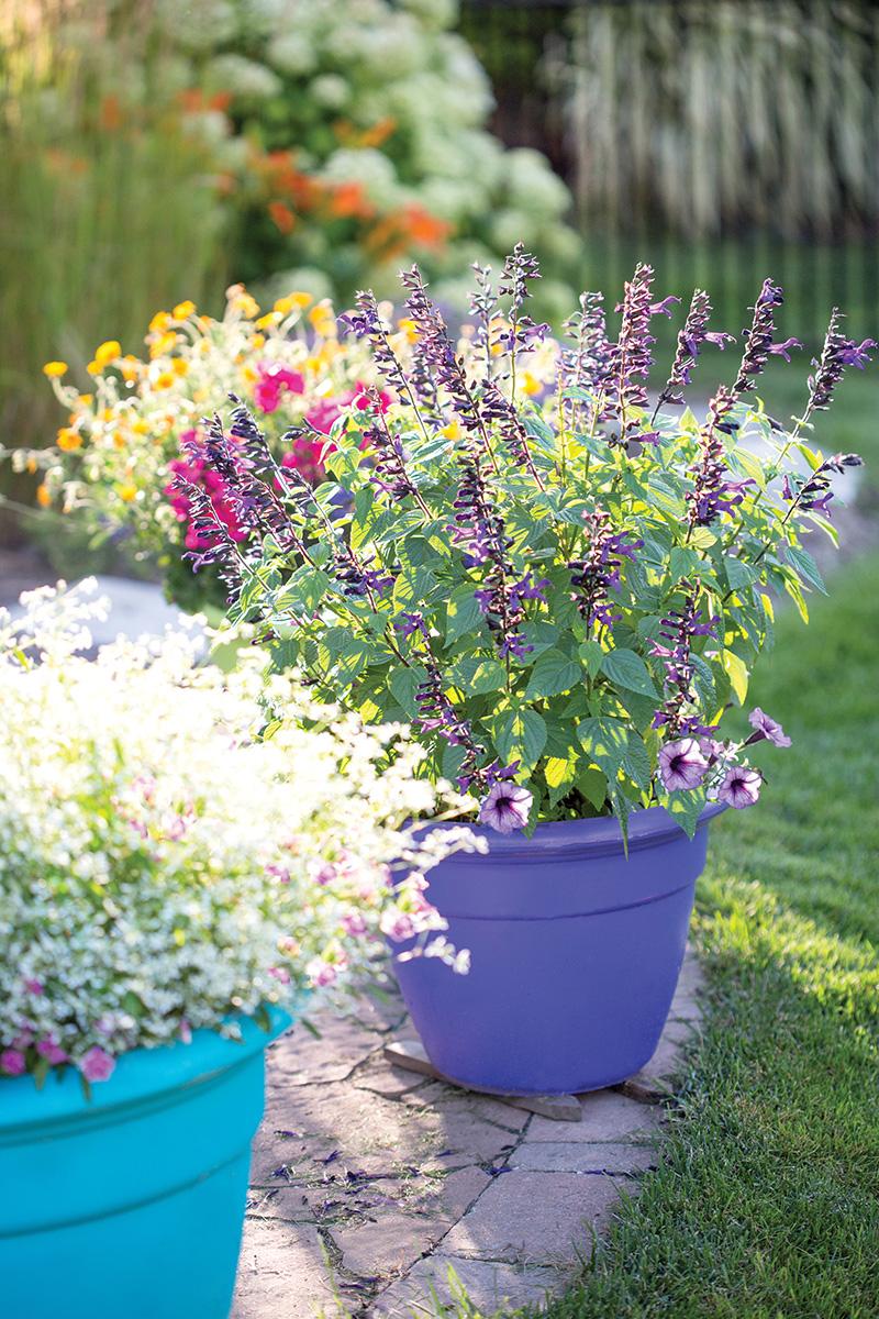 backyard gardening - youth activities