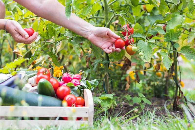 sustainable - gardening