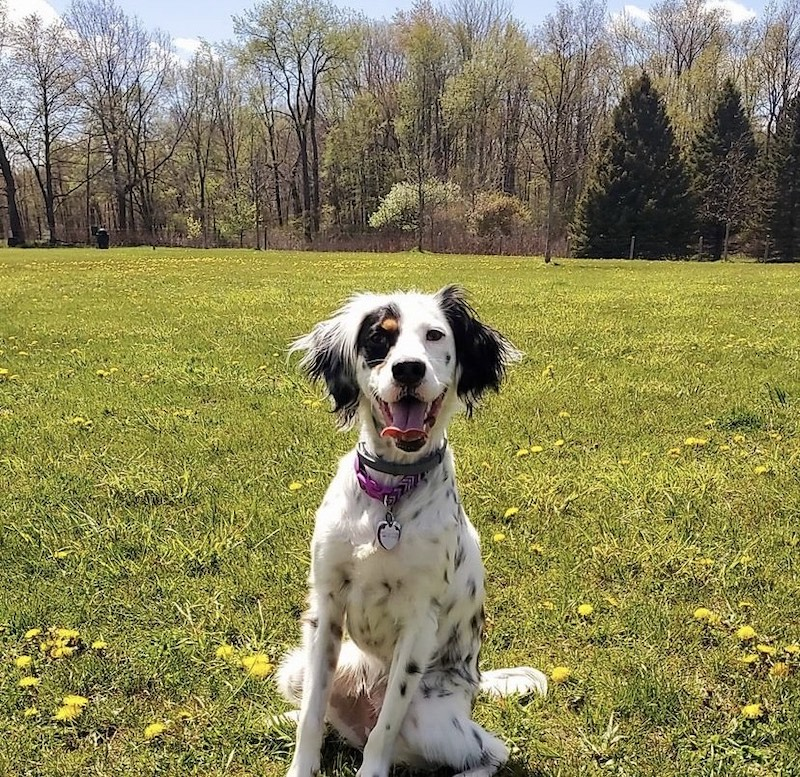 Lyon Oaks Dog Park