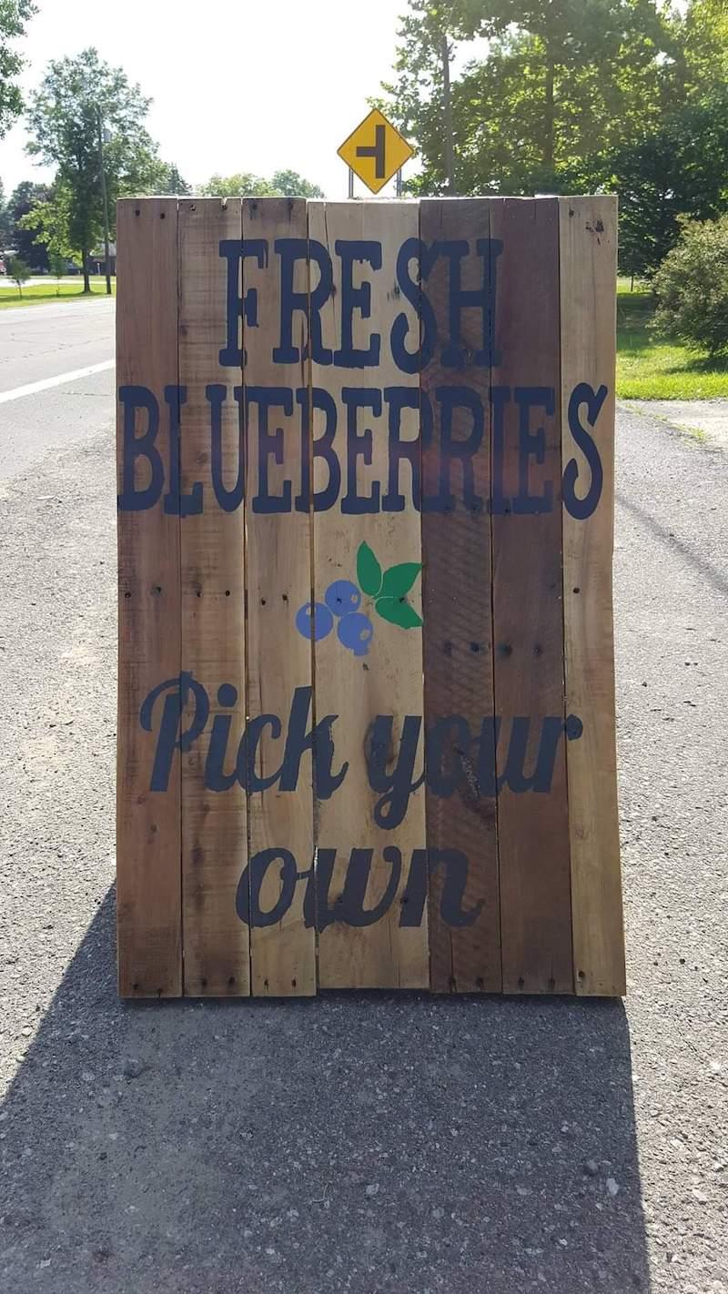 Blueville Acres Blueberry Farm - summer fruit