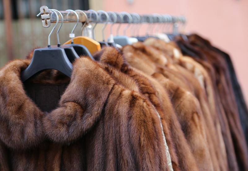ann arbor new fur sales