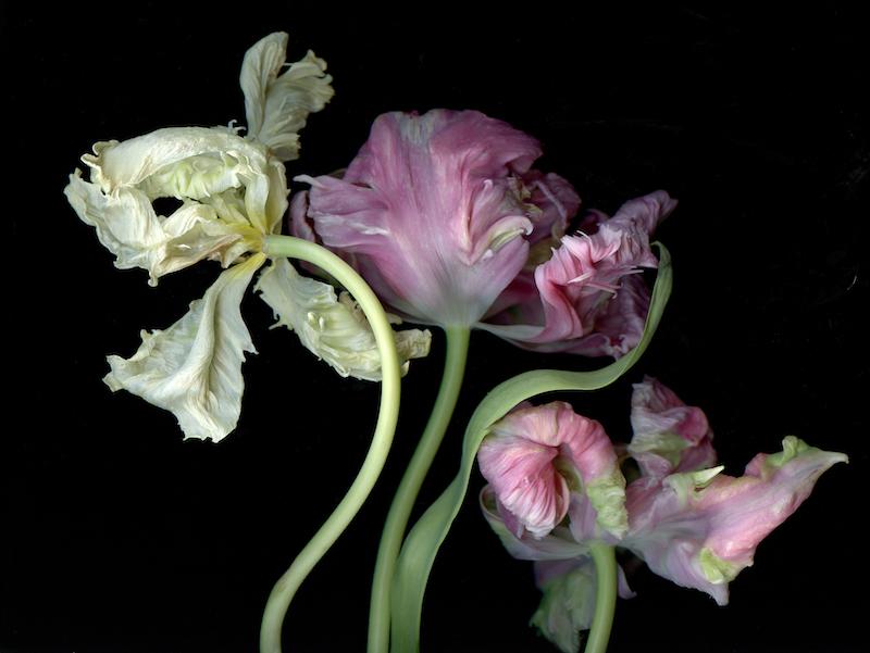 Healing Botanicals